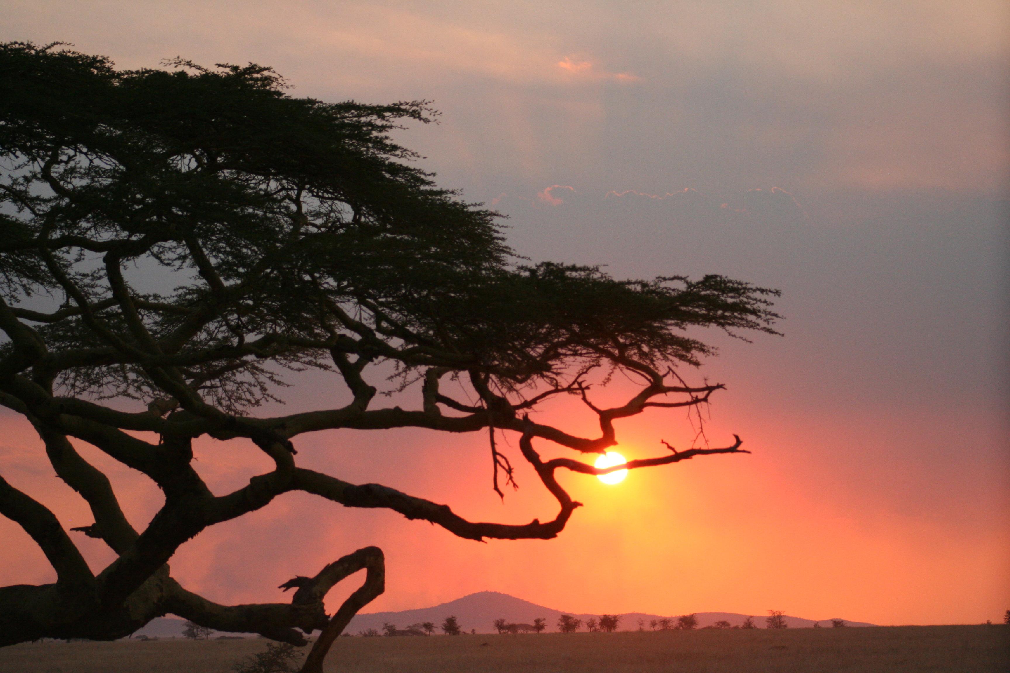 afrika-trae